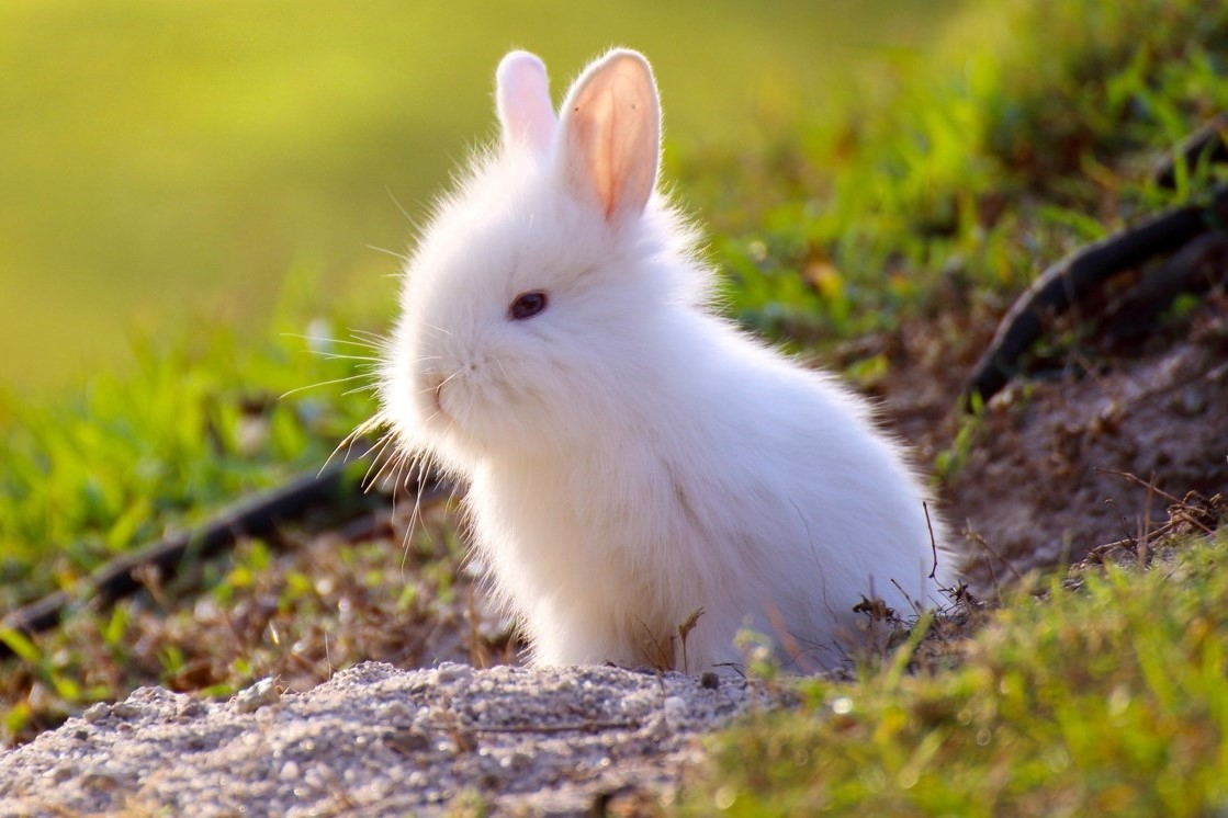 China moves away from mandatory animal testing for cosmetics ...