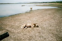 Dead and living dogs, San Miguel, 2011 7