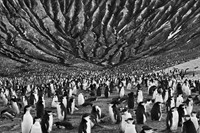 15. Chinstrap penguins, South Sandwich Islands 2009 14