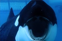 Blackfish Dogwoof Documentary (7) 3