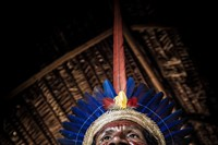 pedro bayeux tribe the chief 27