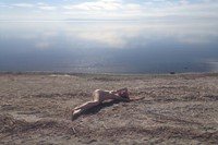 Audrey Wollen The Birth of Venus at the Salton Sea 2