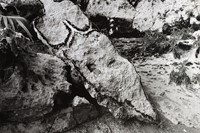 Ana Mendieta's La Tierra Habla (The Earth Speaks) 0
