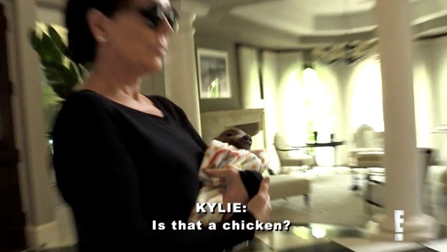 """""""IS THAT A CHICKEN?"""""""
