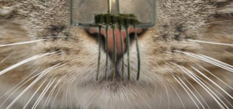 4 - electronic whiskers