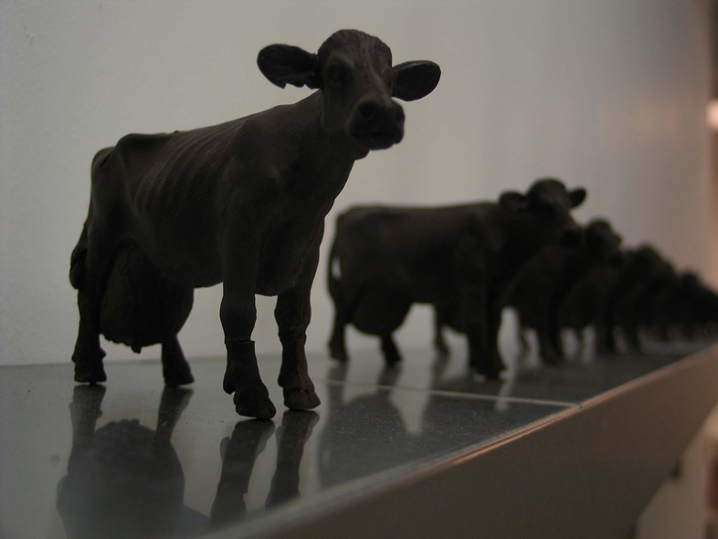 Chocolate Cows, 2006