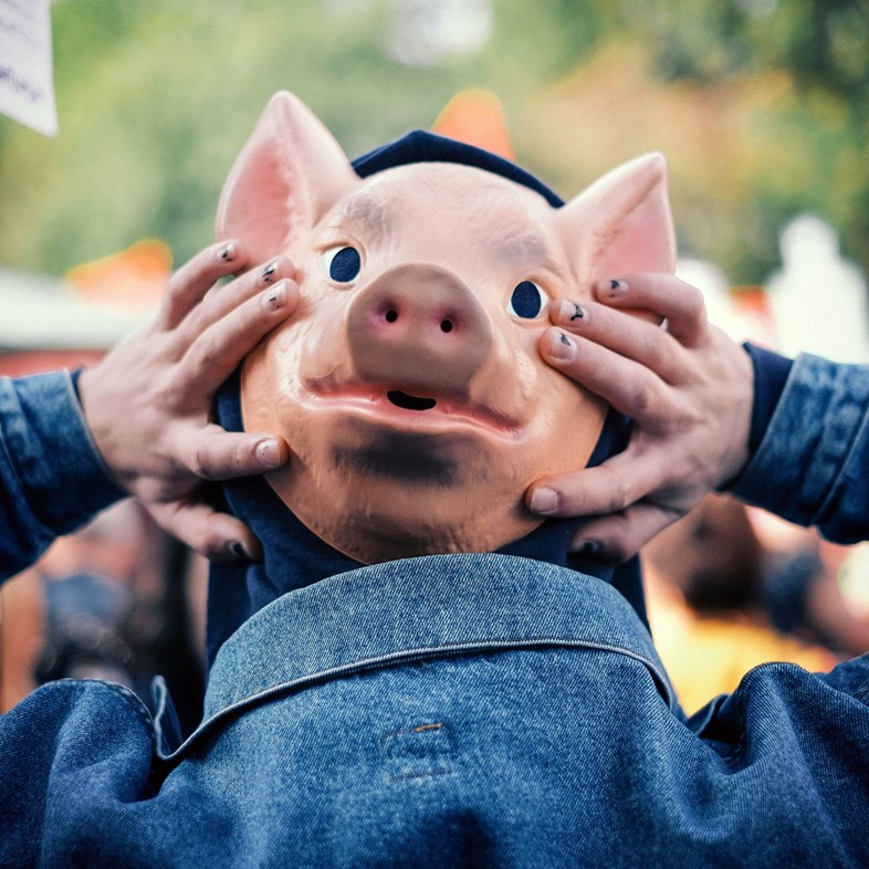 pig protest