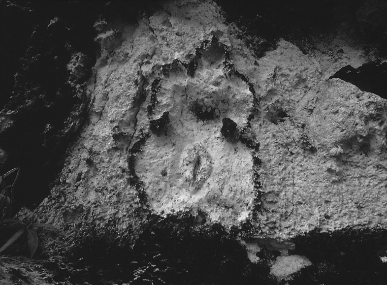 Ana Mendieta's La Tierra Habla (The Earth Speaks)