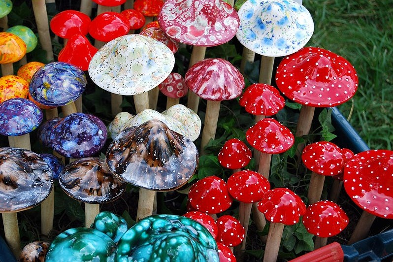 Denver is leading the way by decriminalising shrooms