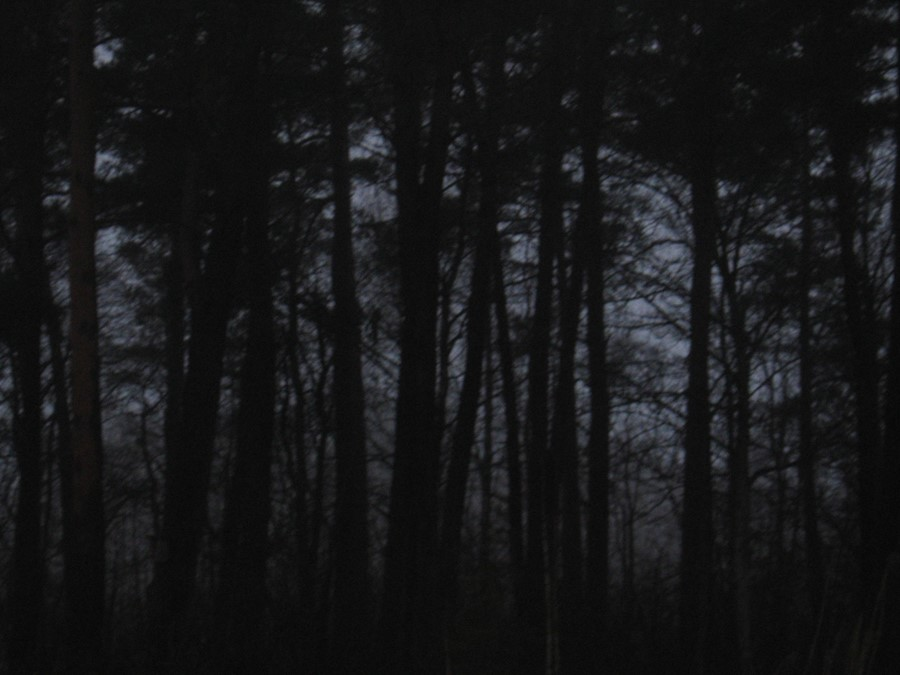 Black_Horror_Forest_by_Sundeal
