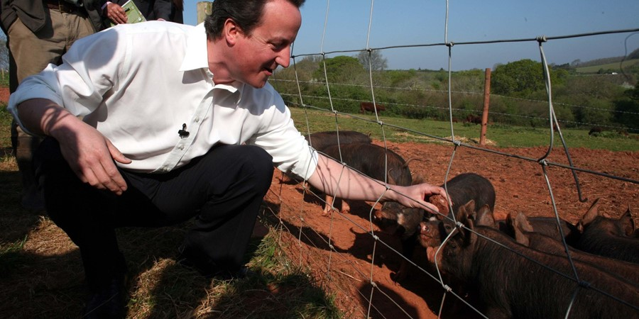 David Cameron accused of putting his dick in pig's mouth | Dazed