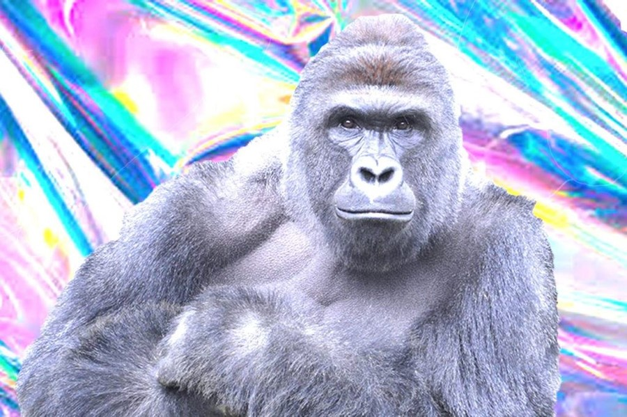 harambeprofilepic-1024x682